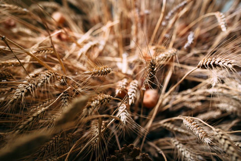 grano in autunno