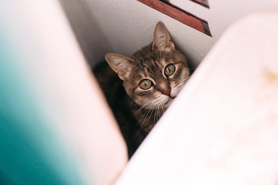 gatto tigrato in casa della sposa