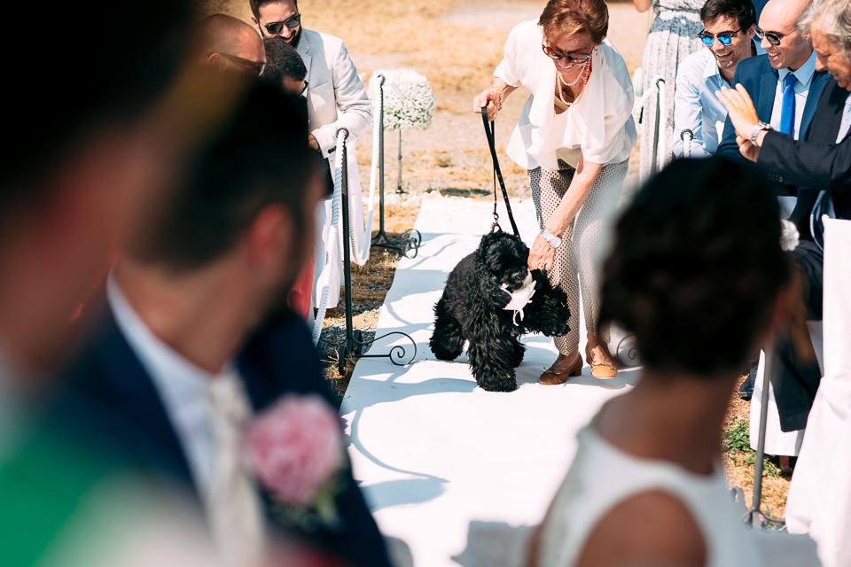 cane di razza cocker spagniel nero porta il cuscino delle fedi all'altare