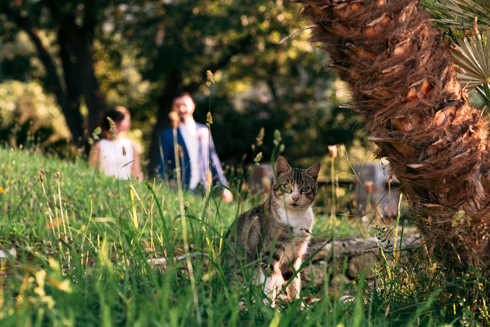 un gatto attende gli sposi al paradiso di manù