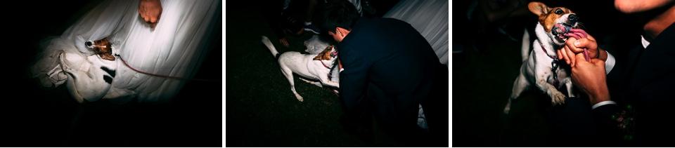 cane matrimonio la ginestra