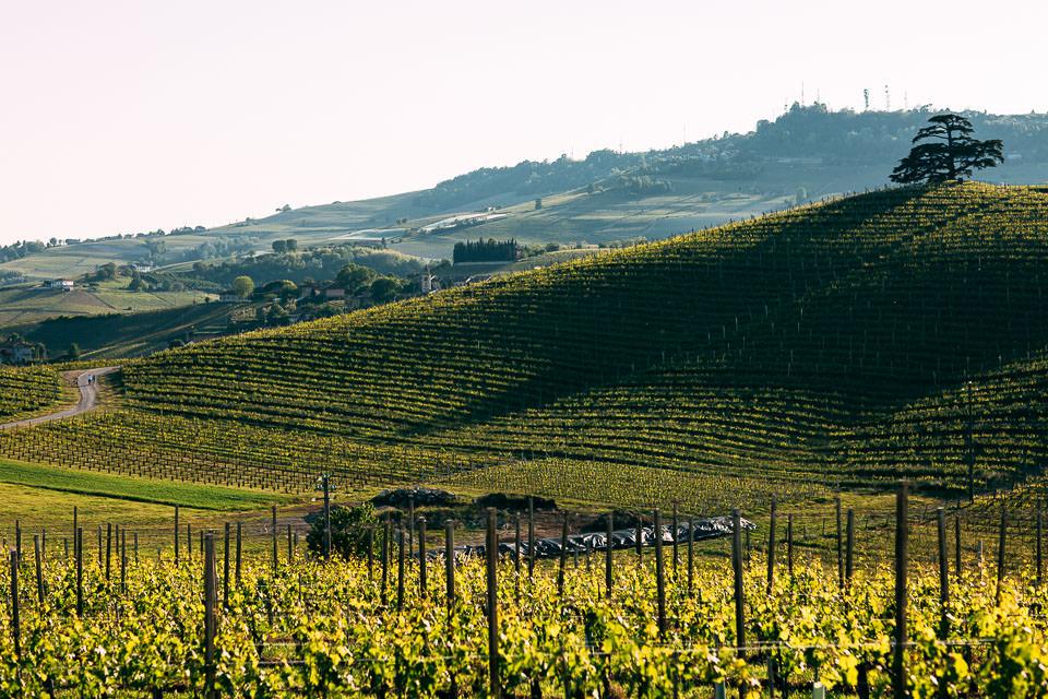 panorama dei vitigni di barolo, langhe