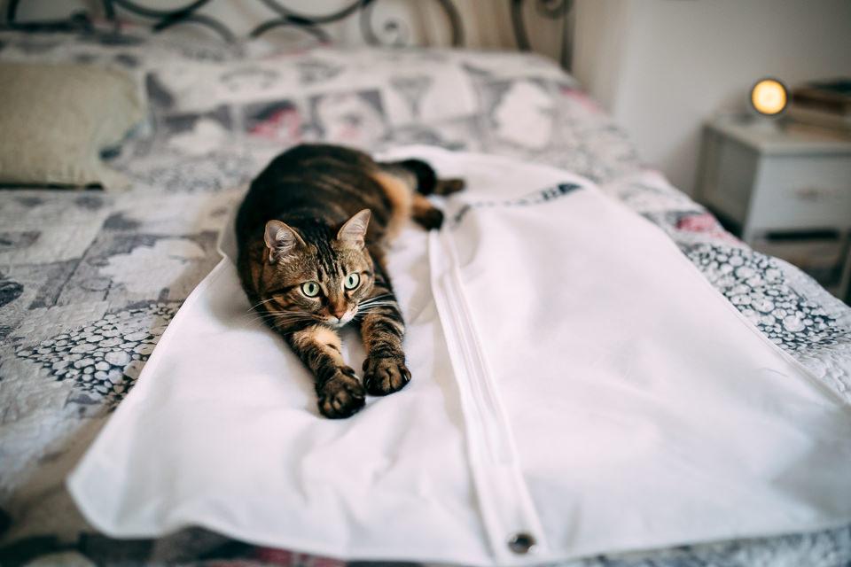 gatto su abito da sposo