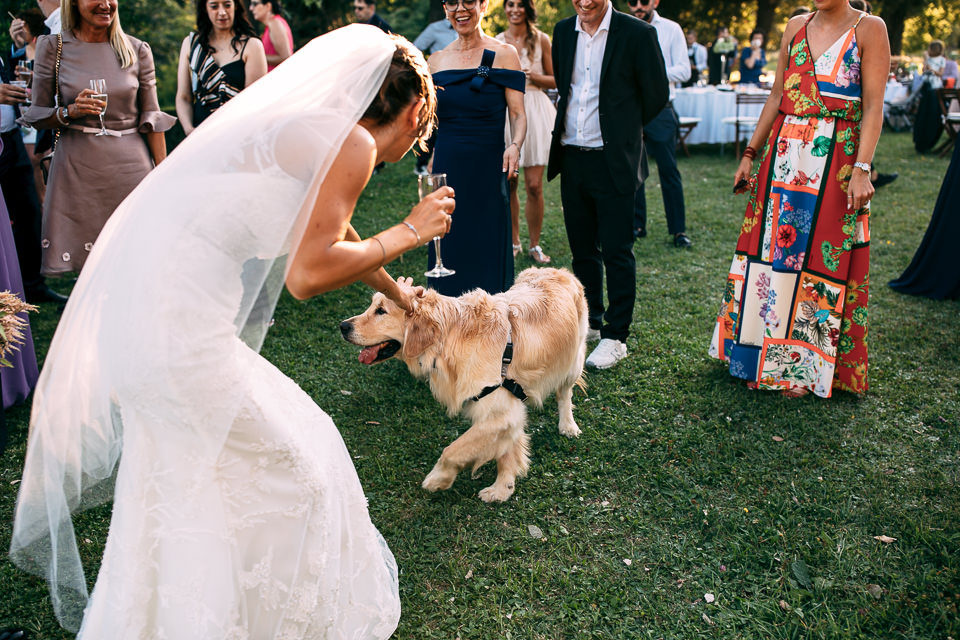 il cane della sposa al castello di quassolo
