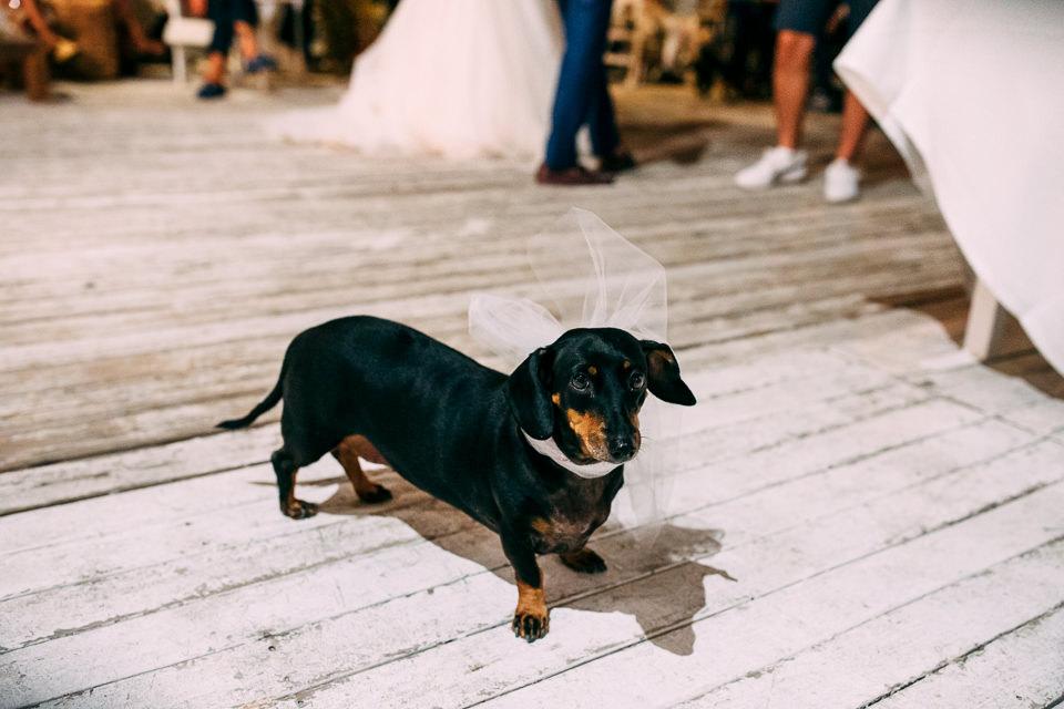 matrimonio con cane a spotorno